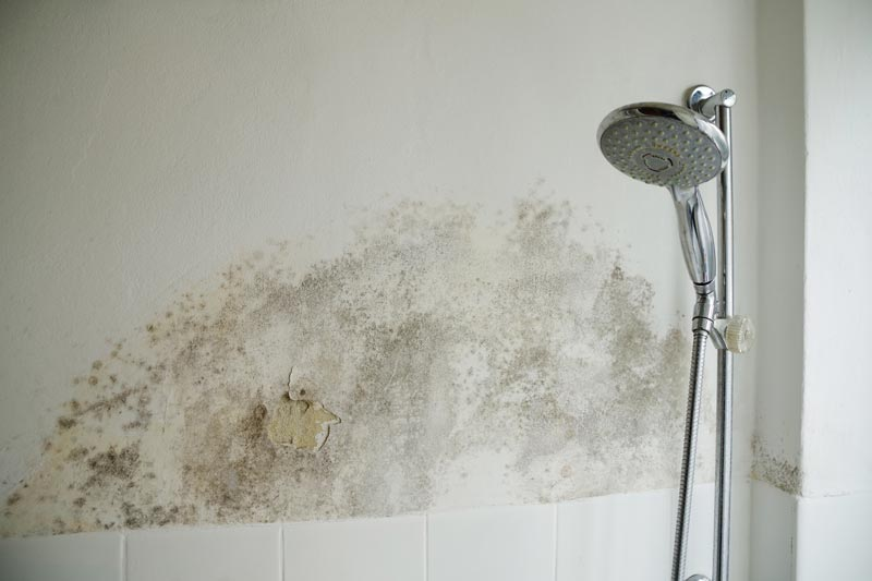 Mold next to the shower